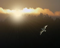 Seagull Sunrise. This is a digital photo taken at sunrise at my home in Mancelona, Michigan during the summer Royalty Free Stock Image