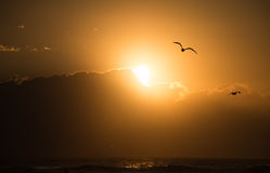 Seagull Sunrise over Ocean Royalty Free Stock Photography