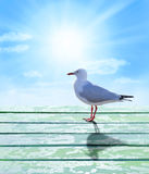 Seagull Sunrise Sky Background Royalty Free Stock Photo