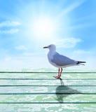 Seagull Sunrise Sky Background royalty free stock photo