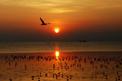 seagull and sunset Royalty Free Stock Photos