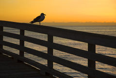 Seagull During Sunset. Seagull on a pier during sunset Royalty Free Stock Photo