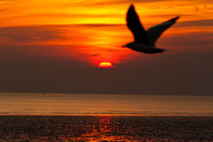 Seagull with sunset. In the background Stock Photo
