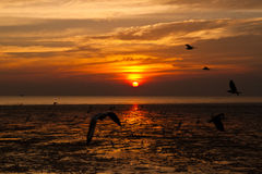 Seagull with sunset. In the background Stock Photos