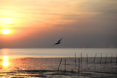 Seagull with sunset in the background Royalty Free Stock Photography