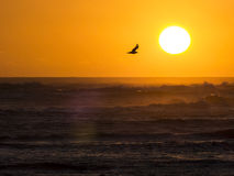 Seagull in sunset at ocean. Royalty Free Stock Images