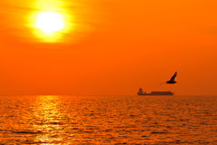 Seagull in the sunset Royalty Free Stock Photo