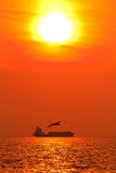 Seagull in the sunset Stock Photography