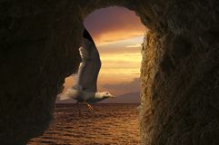 Seagull at sunset on a tropical beach Stock Photo