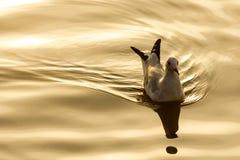 The seagull. Stock Photos