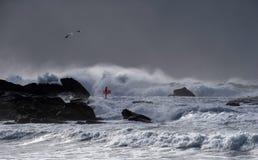 Seagull, surfingowiec, burza Zdjęcie Royalty Free
