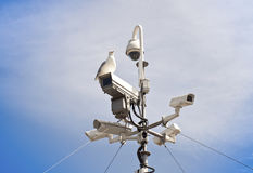 Seagull and surveillance cameras. On lookout Royalty Free Stock Photo