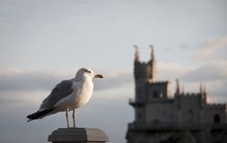 Seagull and Swallow's Nest, Crimea, Ukraine Stock Image