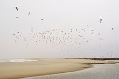 Seagull swarm Royalty Free Stock Photos