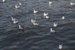 Seagull swimming on the sea Stock Photos