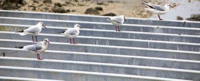 Seagull Symphony stock photo