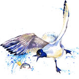 Seagull T-shirt graphics. seagull illustration with splash watercolor textured  background. unusual illustration watercolor seagul. Seagull T-shirt graphics Stock Photography