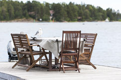 Seagull on a table Royalty Free Stock Image