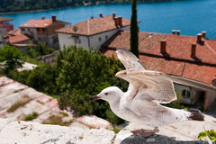 Seagull on take-off. Over small mediterranian town Royalty Free Stock Image
