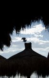 Seagull takes off a palapa tip Royalty Free Stock Image
