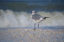 Halfway down: a seagull royalty free stock images