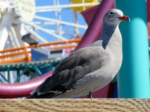 Seagull. Taking a break on the pier Stock Photos