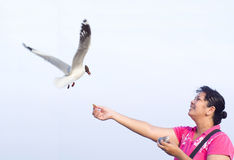 Seagull taking food from woman Royalty Free Stock Images