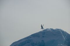 Seagull taking off down slope of iceberg Stock Photography