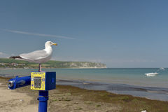 Seagull on telescope, Swanage Royalty Free Stock Images
