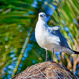 Seagull on thatched roof on the beach of Playa Del Carmen, Yucat Royalty Free Stock Photography