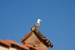 Seagull on tiled roof Royalty Free Stock Photography