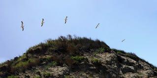 Seagull Timelapse νησιών φραγμών Στοκ φωτογραφία με δικαίωμα ελεύθερης χρήσης