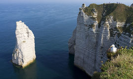 Seagull on the top of Etretat cliff Stock Images