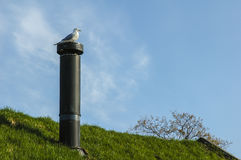 Seagull on the top of the grass roof Stock Image