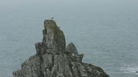 Seagull on Top of a Rock stock video footage
