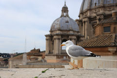 Seagull on top of the San Pietro Dome, Vatican City Stock Images
