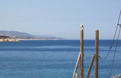 Seagull. On the top of a wooden pole Stock Photo
