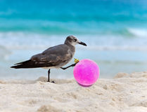 The seagull touches the New Year's ball on a beach near the sea Stock Photos