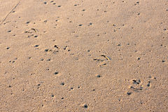 Seagull Tracks in Sand Stock Photos