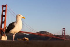 Seagull with a trash paper. Stock Photo