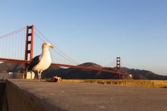 Seagull with a trash paper. Royalty Free Stock Image