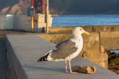 Seagull with a trash paper. Stock Images