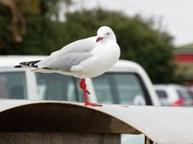 Seagull on trashcan by the beach royalty free stock image