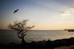 Seagull and tree silhouette. Royalty Free Stock Image