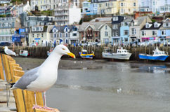 Seagull in a typically British seaside town setting Stock Photo