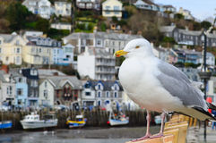Seagull in a typically British seaside town setting Royalty Free Stock Photos