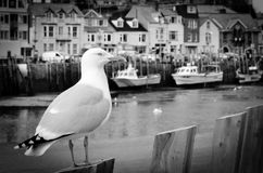 Seagull in a typically British seaside town setting Stock Image