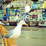 Seagull in a typically British seaside town setting Royalty Free Stock Photography