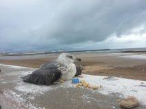 Seagull umiera zdjęcie stock