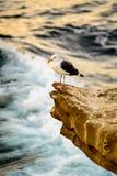 Seagull umieszczający nad fala Obrazy Royalty Free